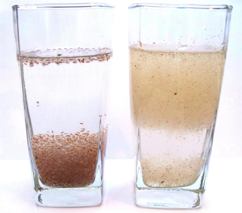 PSYLLIUM IN WATER